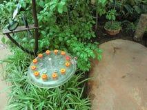 Πεταλούδες που χύνουν το νέκταρ μέσα σε ένα μεγάλο θερμοκήπιο στοκ φωτογραφία με δικαίωμα ελεύθερης χρήσης