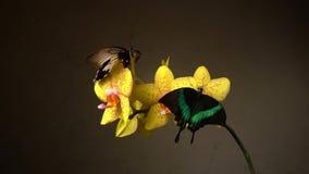 Πεταλούδες σε ένα λουλούδι φιλμ μικρού μήκους