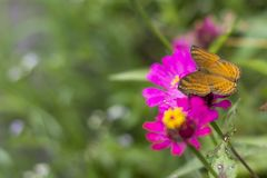 Πεταλούδες στον κήπο λουλουδιών στοκ φωτογραφία με δικαίωμα ελεύθερης χρήσης
