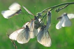 Πεταλούδες στο λουλούδι - macrophotography Στοκ φωτογραφία με δικαίωμα ελεύθερης χρήσης