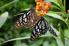 Πεταλούδες στο Χονγκ Κονγκ πάρκων χώρας Maonshan Στοκ εικόνα με δικαίωμα ελεύθερης χρήσης