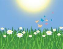 πεταλούδες camomiles απεικόνιση αποθεμάτων