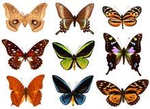 Πεταλούδες Colorfull Στοκ εικόνες με δικαίωμα ελεύθερης χρήσης