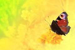 Πεταλούδα. Στοκ Φωτογραφία