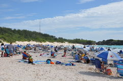 Πεταλοειδής παραλία κόλπων στις Βερμούδες Στοκ εικόνα με δικαίωμα ελεύθερης χρήσης