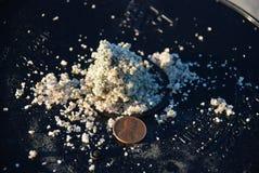 Πεταλοειδή αυγά καβουριών στην άμμο Στοκ εικόνες με δικαίωμα ελεύθερης χρήσης