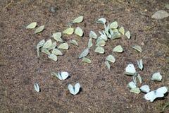 Πεταλούδα λάχανων στην άμμο Στοκ εικόνες με δικαίωμα ελεύθερης χρήσης