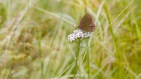 πεταλούδα λίγα Στοκ φωτογραφία με δικαίωμα ελεύθερης χρήσης