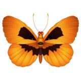 Πεταλούδα αποκριών Στοκ εικόνα με δικαίωμα ελεύθερης χρήσης