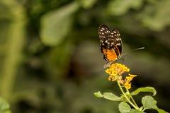 πεταλούδα αρκετά Στοκ φωτογραφία με δικαίωμα ελεύθερης χρήσης