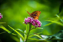 Πεταλούδα α στο λουλούδι Στοκ εικόνες με δικαίωμα ελεύθερης χρήσης