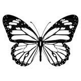 Πεταλούδα γραπτή, άποψη άνωθεν, που απομονώνεται στο άσπρο υπόβαθρο, διανυσματικό έντομο, μονοχρωματική απεικόνιση, χρωματίζοντας διανυσματική απεικόνιση