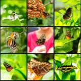 Πεταλούδα εντόμων κολάζ στο μαύρο υπόβαθρο στοκ φωτογραφίες