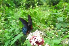 Πεταλούδα, επαρχία Ninh Binh, βόρειο Βιετνάμ Στοκ Εικόνες