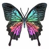 Πεταλούδα ζωηρόχρωμη Διανυσματική απεικόνιση