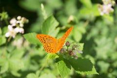 πεταλούδα ζωηρόχρωμη Στοκ φωτογραφία με δικαίωμα ελεύθερης χρήσης