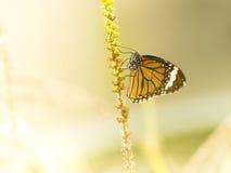 πεταλούδα ζωηρόχρωμη Στοκ Φωτογραφίες