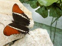 πεταλούδα ζωηρόχρωμη Στοκ Φωτογραφία