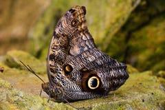 πεταλούδα ΙΙ στοκ φωτογραφία με δικαίωμα ελεύθερης χρήσης