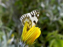 Πεταλούδα 2 κήπων στοκ εικόνα με δικαίωμα ελεύθερης χρήσης