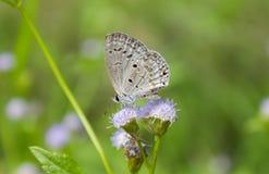 Πεταλούδα και καλό γλυκό άγριο λουλούδι Στοκ Φωτογραφίες
