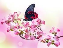 Πεταλούδα και λουλούδια Στοκ φωτογραφίες με δικαίωμα ελεύθερης χρήσης