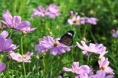 Πεταλούδα και λουλούδι κόσμου Στοκ Εικόνες