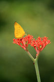 Πεταλούδα και λουλούδι Στοκ Εικόνα