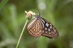 Πεταλούδα και λουλούδι. Στοκ φωτογραφία με δικαίωμα ελεύθερης χρήσης