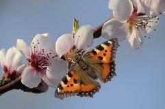 Πεταλούδα και λουλούδι Στοκ Φωτογραφίες