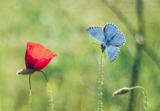 Πεταλούδα και λουλούδι Στοκ φωτογραφία με δικαίωμα ελεύθερης χρήσης