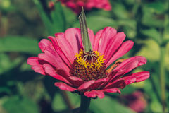 Πεταλούδα κινηματογραφήσεων σε πρώτο πλάνο στο λουλούδι Στοκ φωτογραφίες με δικαίωμα ελεύθερης χρήσης