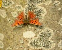 Πεταλούδα κομμάτων Στοκ εικόνες με δικαίωμα ελεύθερης χρήσης
