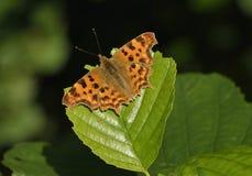 Πεταλούδα κομμάτων Στοκ φωτογραφία με δικαίωμα ελεύθερης χρήσης