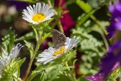 Πεταλούδα μεταξύ των λουλουδιών Στοκ εικόνα με δικαίωμα ελεύθερης χρήσης