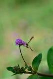 Πεταλούδα με τη μυρωδιά λουλουδιών Στοκ φωτογραφίες με δικαίωμα ελεύθερης χρήσης
