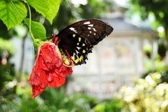 Πεταλούδα & ξηρό λουλούδι Στοκ Εικόνες