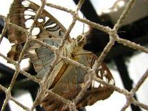 Πεταλούδα πίσω από το πλέγμα Στοκ Φωτογραφία