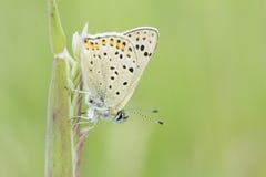 Πεταλούδα - πορτρέτο Στοκ εικόνα με δικαίωμα ελεύθερης χρήσης