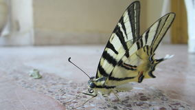 Πεταλούδα που έχει μια σιέστα 4 φιλμ μικρού μήκους