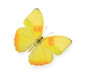 πεταλούδα που απομονώνεται κίτρινη στοκ φωτογραφία με δικαίωμα ελεύθερης χρήσης