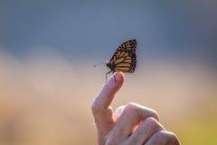 Πεταλούδα που σκαρφαλώνει στο δάχτυλο Στοκ φωτογραφία με δικαίωμα ελεύθερης χρήσης