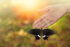 Πεταλούδα που στηρίζεται όμορφη στο woman& x27 χέρι του s Στοκ Εικόνες