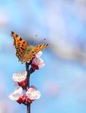 Πεταλούδα σε έναν βλαστάνοντας κλάδο Στοκ Εικόνες