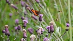 Πεταλούδα σε έναν κάρδο Στοκ εικόνες με δικαίωμα ελεύθερης χρήσης
