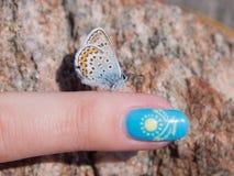 Πεταλούδα σε ένα δάχτυλο στοκ εικόνα