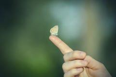 Πεταλούδα σε ένα δάχτυλο Στοκ φωτογραφίες με δικαίωμα ελεύθερης χρήσης