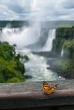 Πεταλούδα σε ένα κιγκλίδωμα τα φθινόπωρα Iguazu σε μια νεφελώδη ημέρα Στοκ Φωτογραφίες