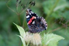 Πεταλούδα σε ένα φύλλο Στοκ Εικόνες