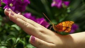 Πεταλούδα σε ετοιμότητα ανθρώπινο απόθεμα βίντεο